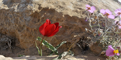 1 & 2 day tours in the Negev