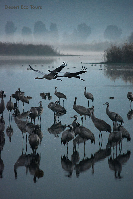 Hahula lake- Galilee