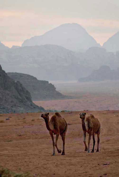 Camel, jeep, hiking tours, Wadi Rum, Jordan