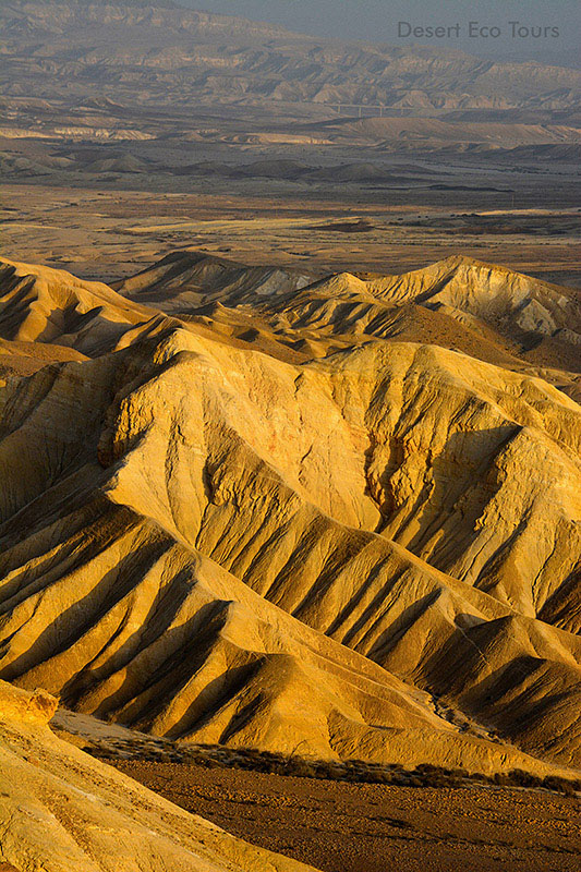 Negev tours: Zin Valley, Nahal Zin
