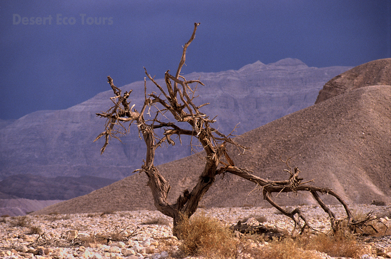 The Timna Valley- Eilat Mts