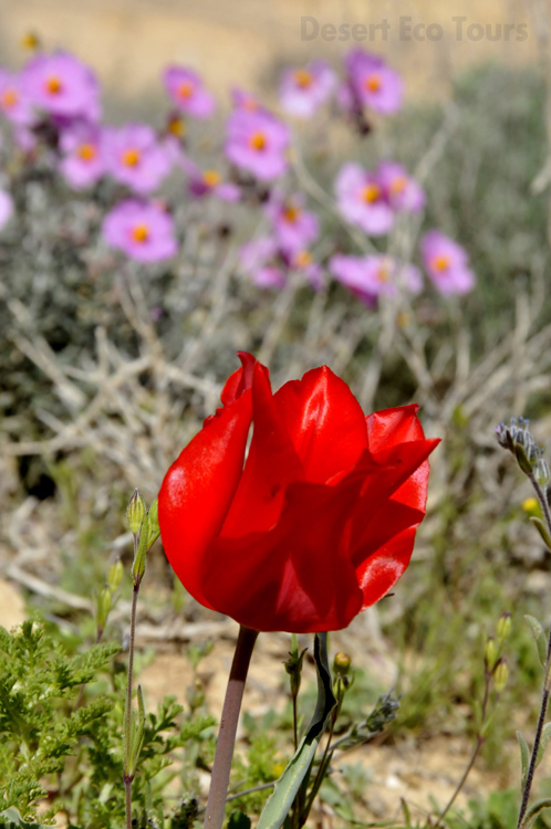 Tours in the Negev desert- spring